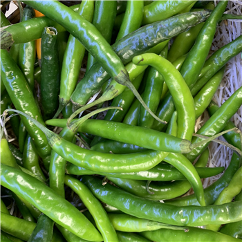 Chillies (Green)