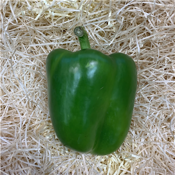 Peppers (Green)