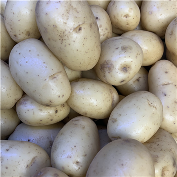 Potatoes (Washed Mids)